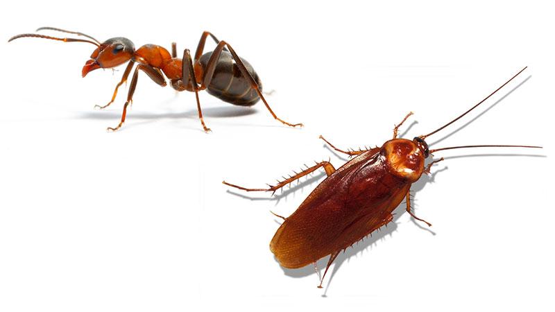 הדברת ג'וקים ונמלים